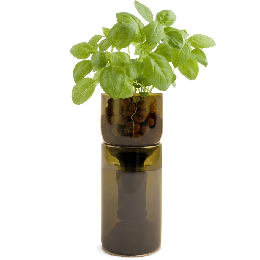 Grow Bottle - Basil