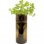 Grow Bottle - Parsley